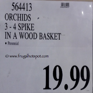 Costco Flowers Orchids in Wood Basket Price