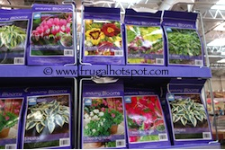 Enduring Blooms Spring Perennial Assortment Costco