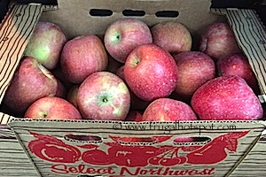 Lattin's Country Cider Mill and Farm Apples
