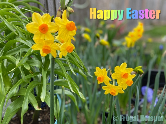 Happy Easter (yellow flowers) | Frugal Hotspot 2021